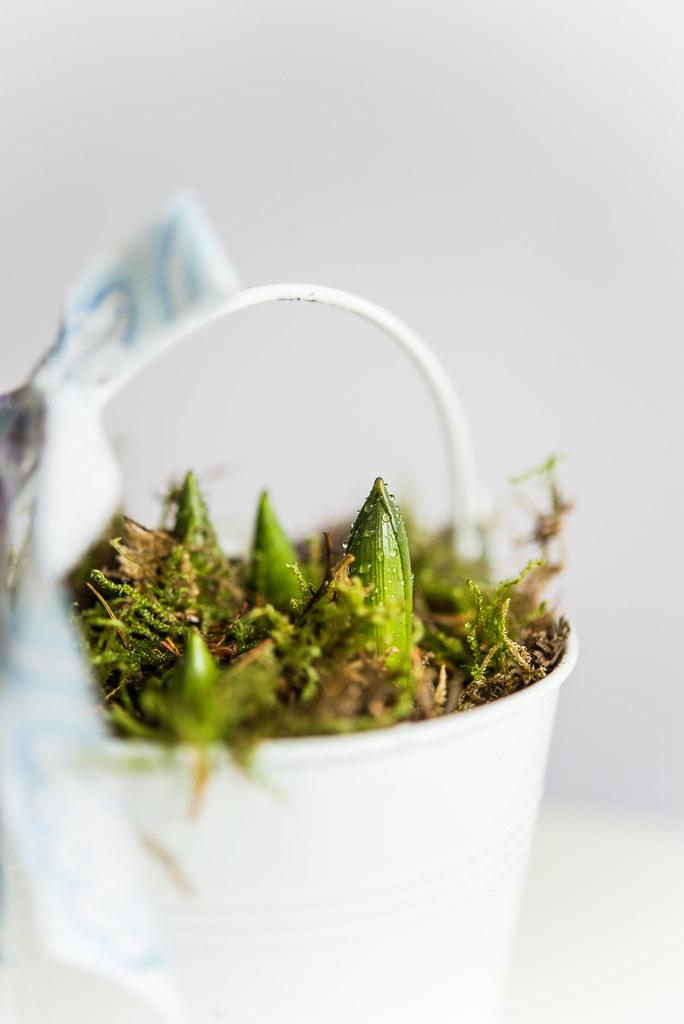 first_spring (11 von 12)