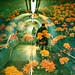 Lomo – blooming tube by lomomowlem