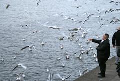 Seagulls at Binnenalster