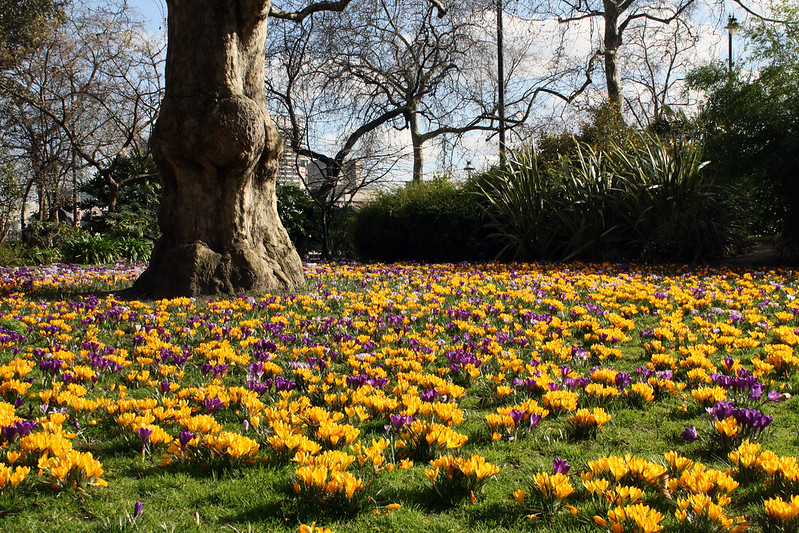 The London Project, Yellow and Purple Flowers