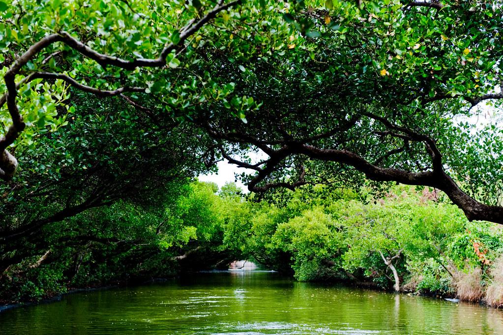 台南安南【四草台江生態國家公園】~水上綠色隧道+大眾廟,親子生態&歷史之旅~