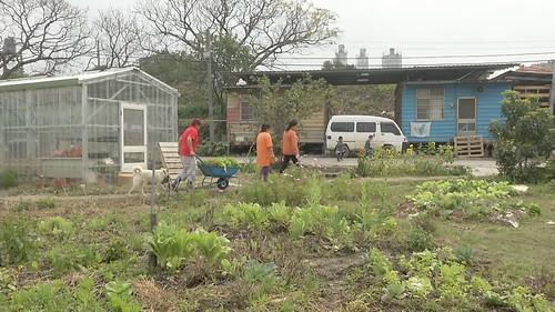 新竹市郊的千田農場。