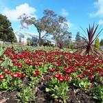 Singleton in bloom 22nd March 2014 (26)