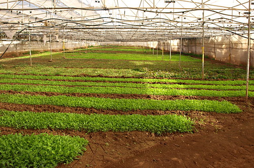 Organic farming on Tenerife