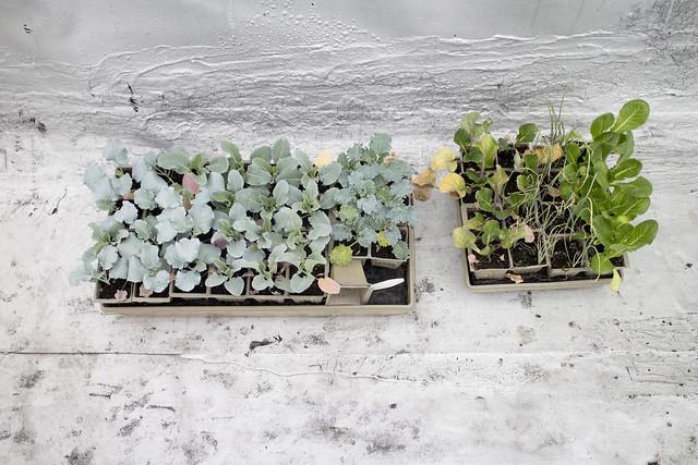 Seedling Planting Spring 2014