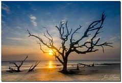 A tree in Jekyll Island