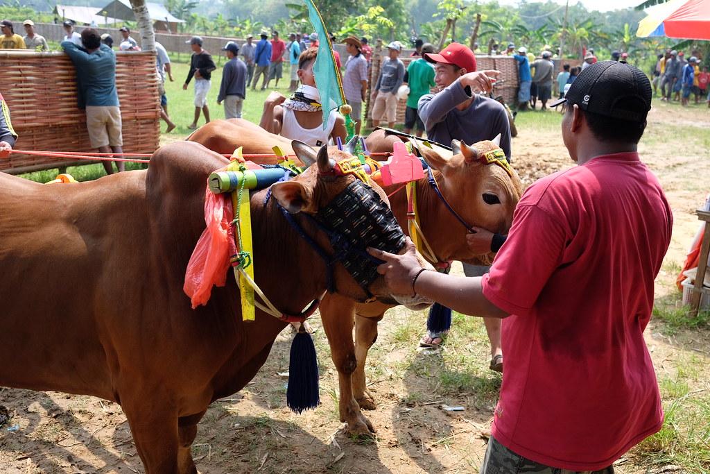 Potret madura --> pasar 17th agustus dan karapan sapi #maduraphotomarathon2017 #pergipergi