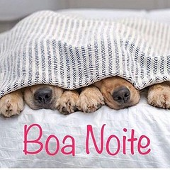Bon Nuit ! #blogauroradecinemadeseja  #buenanotte:kiss::kiss::two_hearts::heart: #cool  #buenasnoches:heart: #bonnuit:moon: #bonnenuit:zzz: #nights #dogs #bonanit @glorinhadelirada