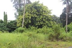 園區內不乏樹形美麗的老樹。
