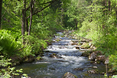 nature reserve, stream, woodland, rainforest, water feature, rapid, river, riparian forest, creek, body of water, watercourse, forest, natural environment, wilderness, state park, jungle, vegetation,