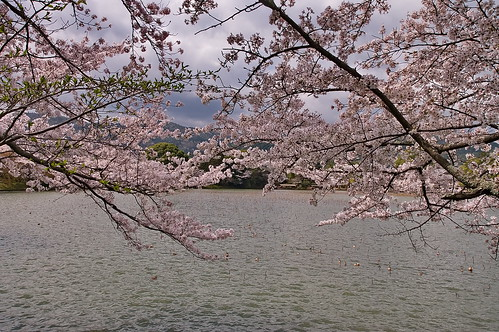 【写真】2013 桜 : 大覚寺/2020-09-15/IMGP9435