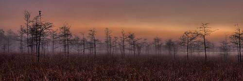 Dew in the morning, NPSphoto, G.Gardner