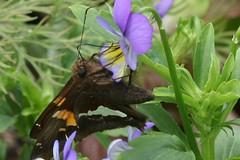 pollinator 001