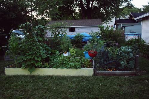 weekly garden update