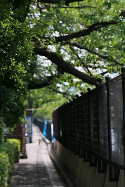 bokeh 2 Canon EOS 70D