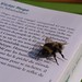 Small photo of A Miserable Bee