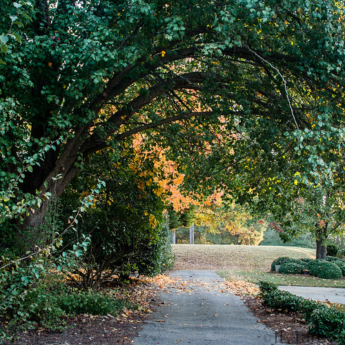 autumn fall yellow gold fallcolor tunnel autumnleaves walkway autumncolor goldenhills golfcartpath