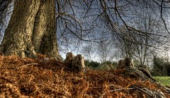 2009 11 19 Gimborn Arboretum