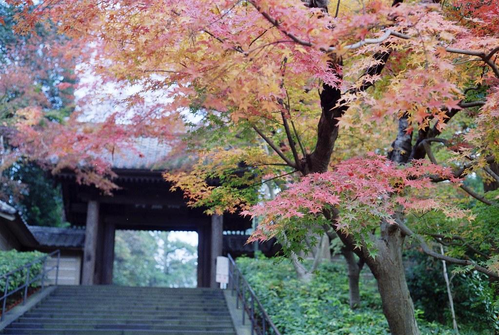 秋模様 in 鎌倉円覚寺
