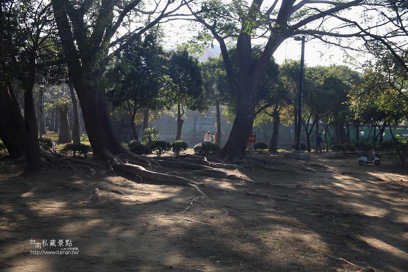 台南私藏景點--巴克禮落羽松 (10)