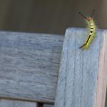 Caterpillar on a chair