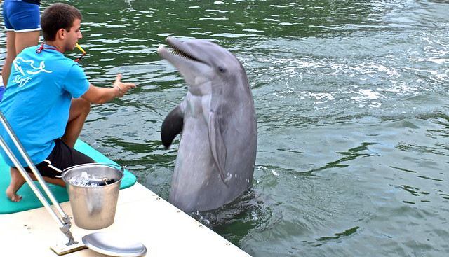 Swimming with Dolphins - Key Largo, Florida - trick with trainer