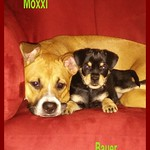 Moxxi & Bauer