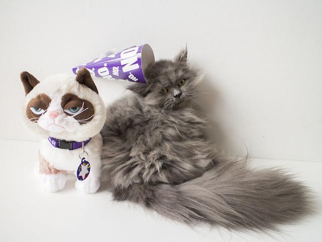 Grumpy Cat Birthday_9