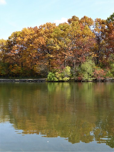 wheatonil herricklakeforestpreserve nature fall flora trees leaves foliage yellow red pond lake water reflection