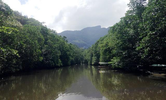 huong2go_puertoprincesa_mangrove