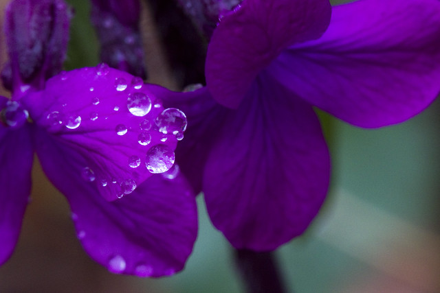Rain on Honesty