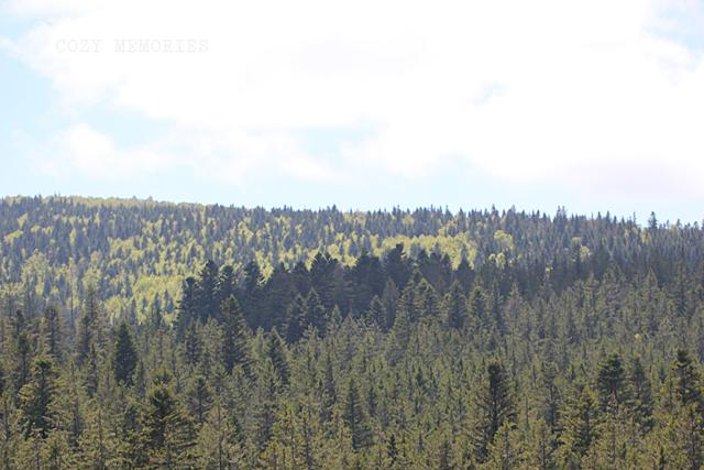 Mont Aigoual - part seven