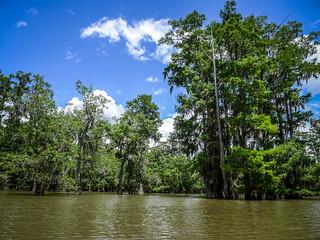 Sparkleberry Swamp (12 of 24)