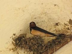 destinato al nido