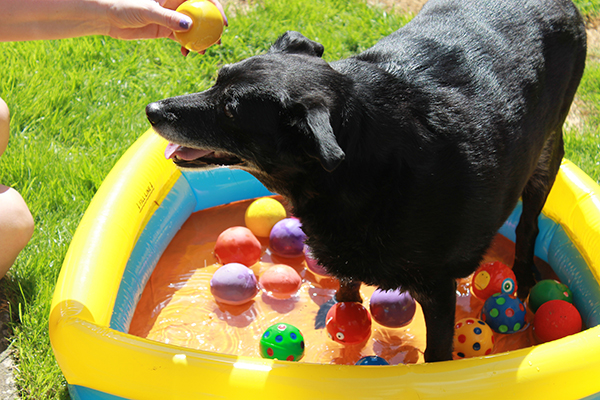 Dog in Paddling Pool, Summer
