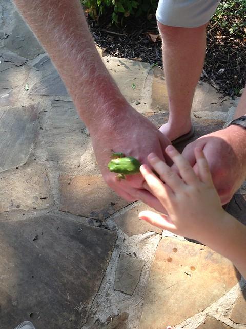 tree frog2