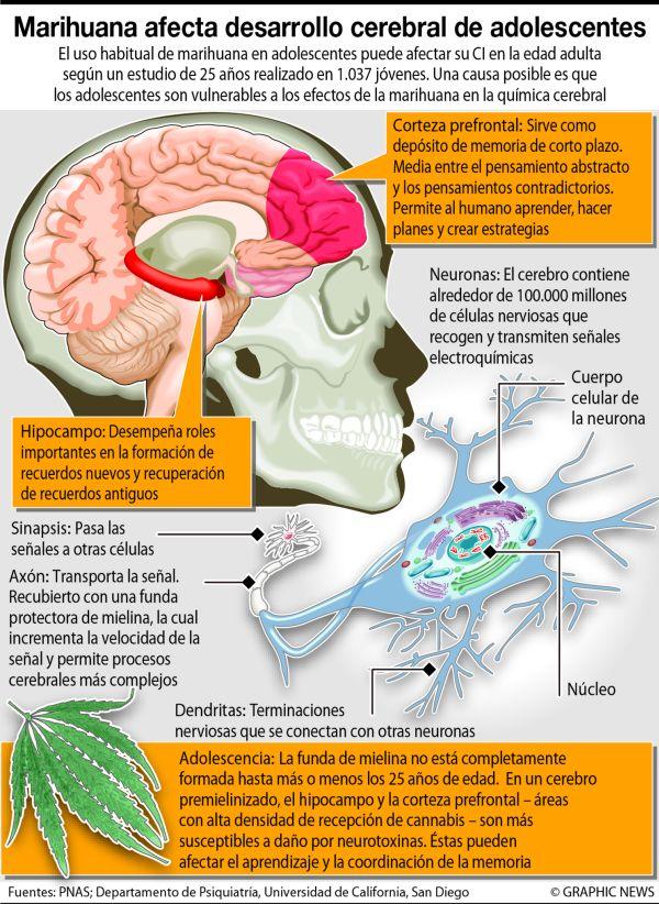 El efecto de la marihuana en el desarrollo cerebral de los jóvenes ...
