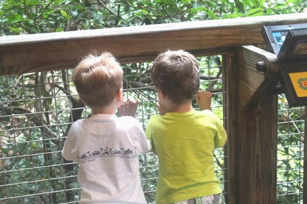 Atlanta Zoo '13, 5