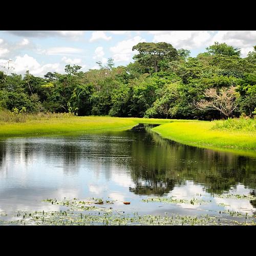 #instacanvas #czs #cruzeirodosul #rio #igarape #amazonia #iphoneography #instagramhub #bestoftheday #clubsocial #natgeo #igersdizquefuiporai #nationalgeographic #natgeowild #instagood #photooftheday #instagain #clouds #sky #beautiful #statigram #photo #is