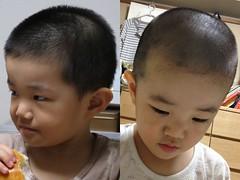とらちゃん散髪ビフォーアフター 2013/8/25