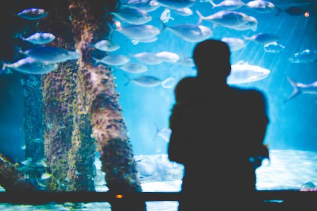 Aquarium-64