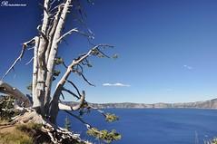 Oregon Loop - Crater Lake National Park