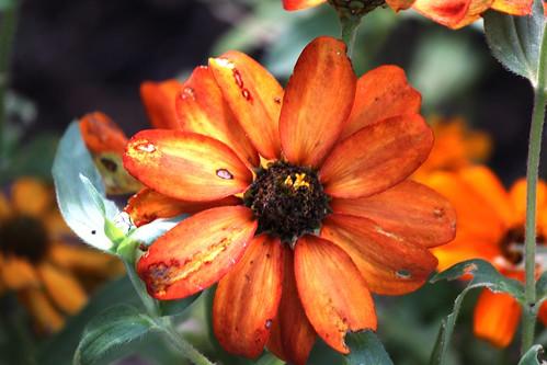 IMG_1582_At_Leila_Arboretum