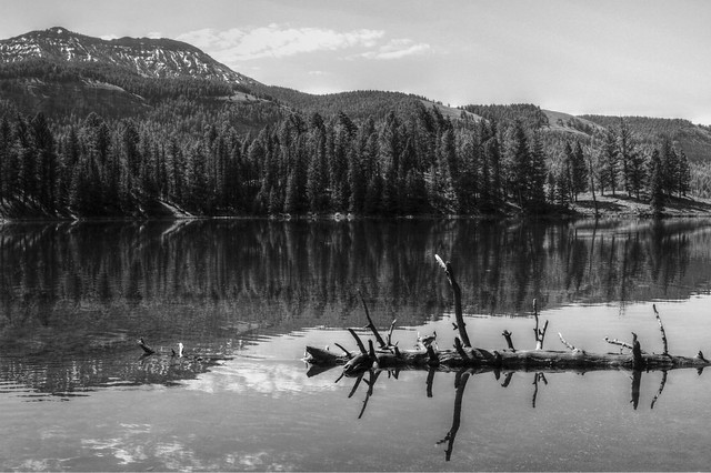 Trout Lake Black and White