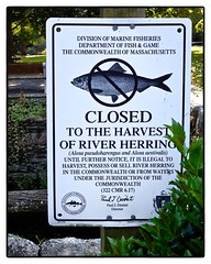 N37 - Closed to the Harvest of River Herring