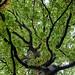 Evolving Landscape Walk In Windsor Great Park