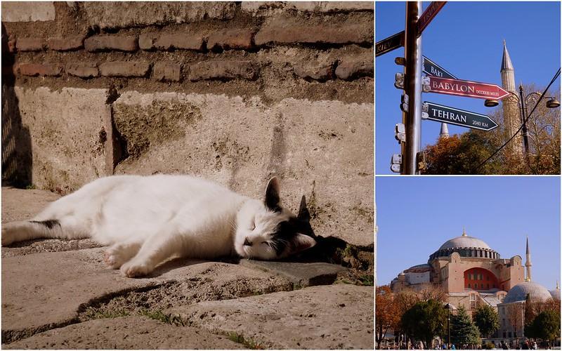 Stray-Cats-Istanbul-(1)