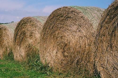 Hay rolls 3