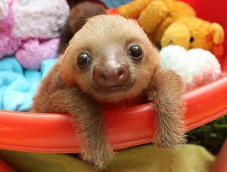 POTD_sloth_2715795k