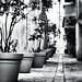 DSC_0318_Jarres B&W by paulcarlotti